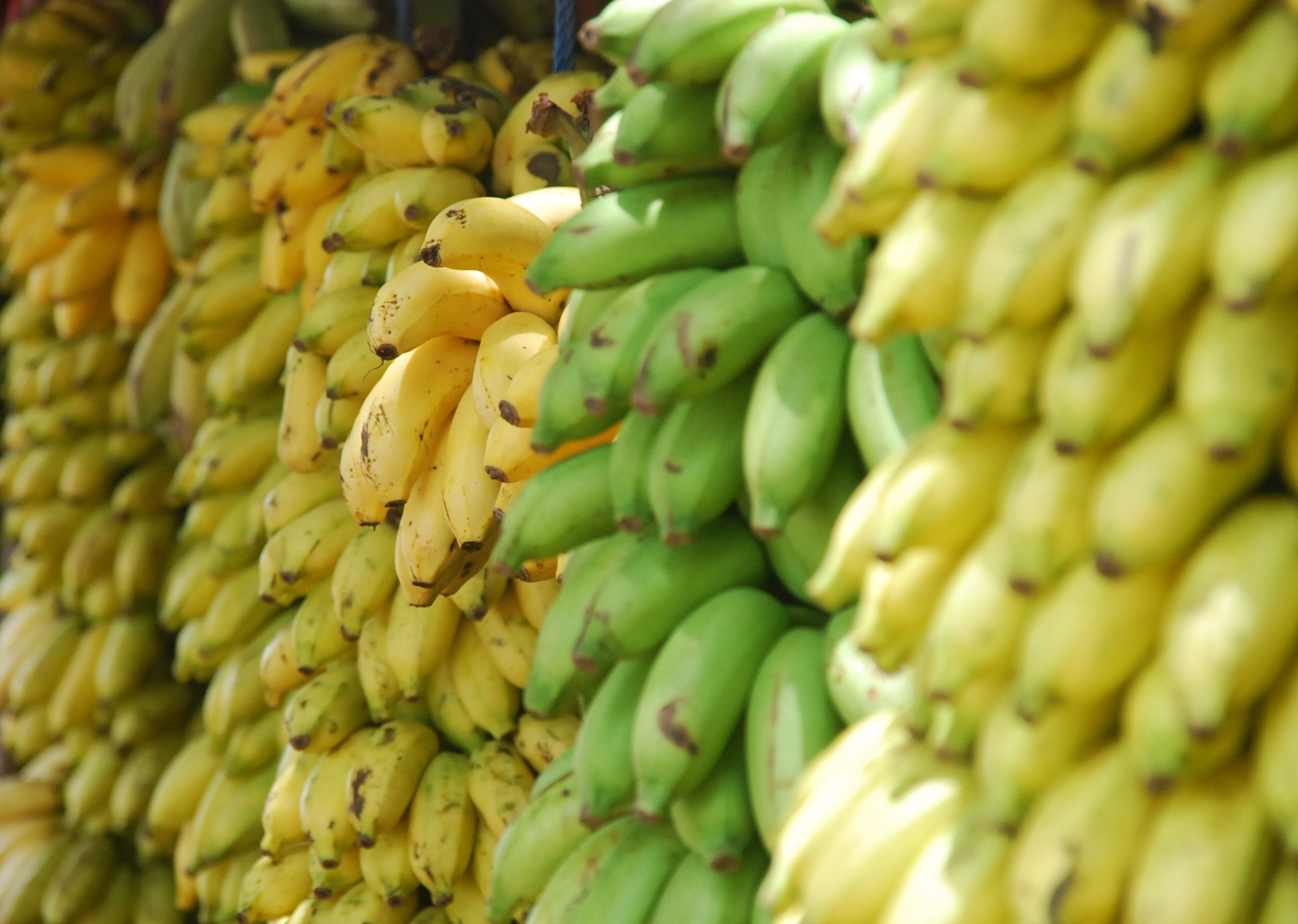Lead nurturing: are your bananas too ripe?